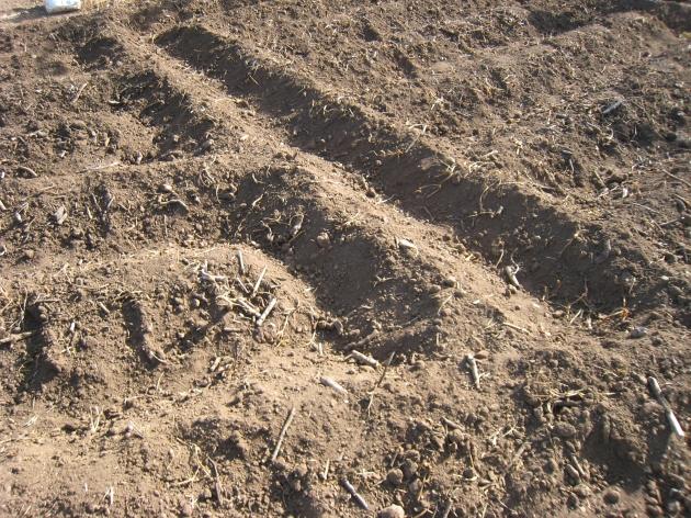 Surcos para conducir el agua en el regadío, se plantaron papas de invierno, se regó la tierra con tajos para poder ararla, abonarla, surcala y plantar las semillas. Siempre esperando que llueva.